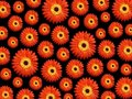 Vibrant daisy background Royalty Free Stock Photos