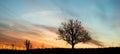 Vibrant dawn single tree silhouette