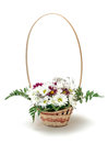 Vibrant Flowers Daisies in Basket Stock Image