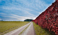 Vibrant hedgerow in the german countryside Stock Photo