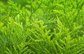 Vibrant leafy green background Royalty Free Stock Image