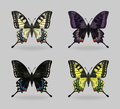 Vibrant multy color insect Papilio machaon butterflies