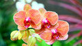 Vibrant orchids beautiful with colorful background Royalty Free Stock Image
