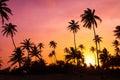Vibrant palm sunset