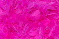 Vibrant pink feathers abstract background Royalty Free Stock Photography