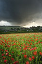 Vibrant poppy fields under moody dramatic sky Royalty Free Stock Photos