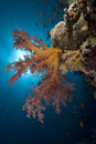 Vibrant soft coral Stock Photo