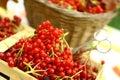 Viburnum ripe basket close up autumn photo in Royalty Free Stock Image