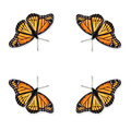 Viceroy Butterfly Limenitis archippus Royalty Free Stock Photo