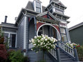 Victorian house with white rose bush in front Royalty Free Stock Photo