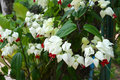 Vides de la flor blanca Foto de archivo