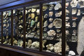 Exhibits and expositions in the Museum of Natural History, Vienna. Royalty Free Stock Photo