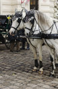 Vienna horses carriage with for hire in austria near hofburg palace austria Royalty Free Stock Photos