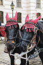 Vienna horses carriage with for hire in austria near hofburg palace austria Stock Photo