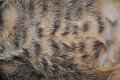 Vientre del gato Fotos de archivo