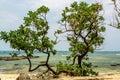 Vietnam beach on ly son island Royalty Free Stock Image
