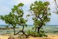 Vietnam beach on ly son island Stock Photo