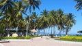 City Palm Trees