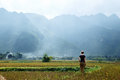 Vietnam`s rice field Royalty Free Stock Photo