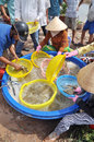 Vietnamese farmers are grading shrimps after harvesting from their pond before selling to processing plants in bac lieu city Stock Photography