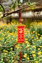 Vietnamese New Year decoration on a blurred background of yellow flowers. Royalty Free Stock Photo