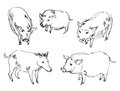 Vietnamese pig wild boar set hand drawn Royalty Free Stock Photography