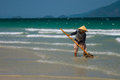 A Vietnamese woman is collecting sea shells on the shore in Nha Trang, Vietnam Royalty Free Stock Photo