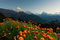 View of Annapurna and Machapuchare peak at Sunrise from Tadapani ,Nepal. Royalty Free Stock Photo