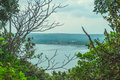 View of the bay through the green undergrowth of trees in cloudy weather