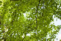 View from below on Green forest. Royalty Free Stock Photo