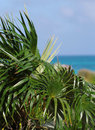 The view on the bright blue ocean through green leaves Royalty Free Stock Photo
