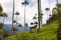 View of the Cocora Valley Valle del Cocora in Colombia with Wax Palm Trees and horses Royalty Free Stock Photo