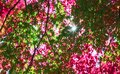 Red and green autumn canopy on a bright day Royalty Free Stock Photo