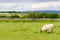 View of the Cotswolds from Cleeve Hill near Cheltenham. Royalty Free Stock Photo