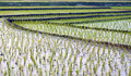 View of cultivated field Royalty Free Stock Photo