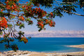 View of the Dead Sea, Israel Royalty Free Stock Photo