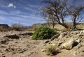 View on desert in Timna park, spring, Israel Stock Images