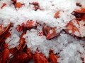 Cooked lobsters Royalty Free Stock Photo