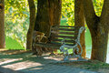 View of the empty bench in the summer park Royalty Free Stock Photo