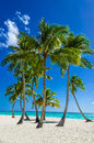 View of an exotic beach with tall palm trees and golden sand Royalty Free Stock Photo