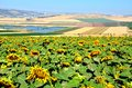 Jezrael Valley Israel