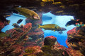View fishes in aquarium of barcelona spain Stock Photos