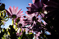 View of flowers from below Royalty Free Stock Photo