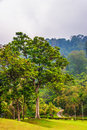 View on foggy jungle island tioman malaysia Royalty Free Stock Photo