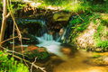View of a forest stream Royalty Free Stock Photo