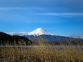 View of Fuji mountain with white snow top, dried grass flower fo