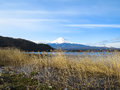 View of Fuji mountain with white snow top, dried grass foregroun