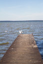 The view of gulls on the pier. Plescheevo lake. Autumn. Pereslavl-Zalessky. Russia. Royalty Free Stock Photo