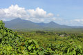 View of the jungle with mountains Royalty Free Stock Photo