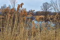 View of the lake overgrown with reeds spring Royalty Free Stock Photos